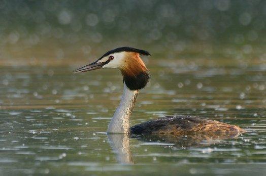 Птицы на Скадарском озере
